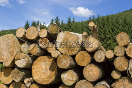 stack of wood with blue sky