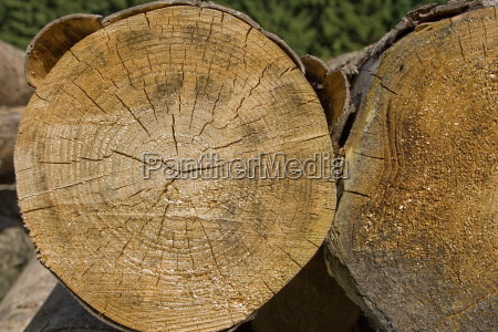 tree wood bark raw material annual