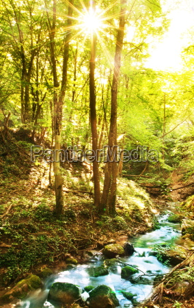 creek, in, forest - 2277349