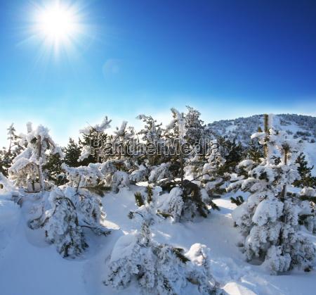 winter - 2277775