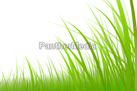 grass graphic meadow illustration