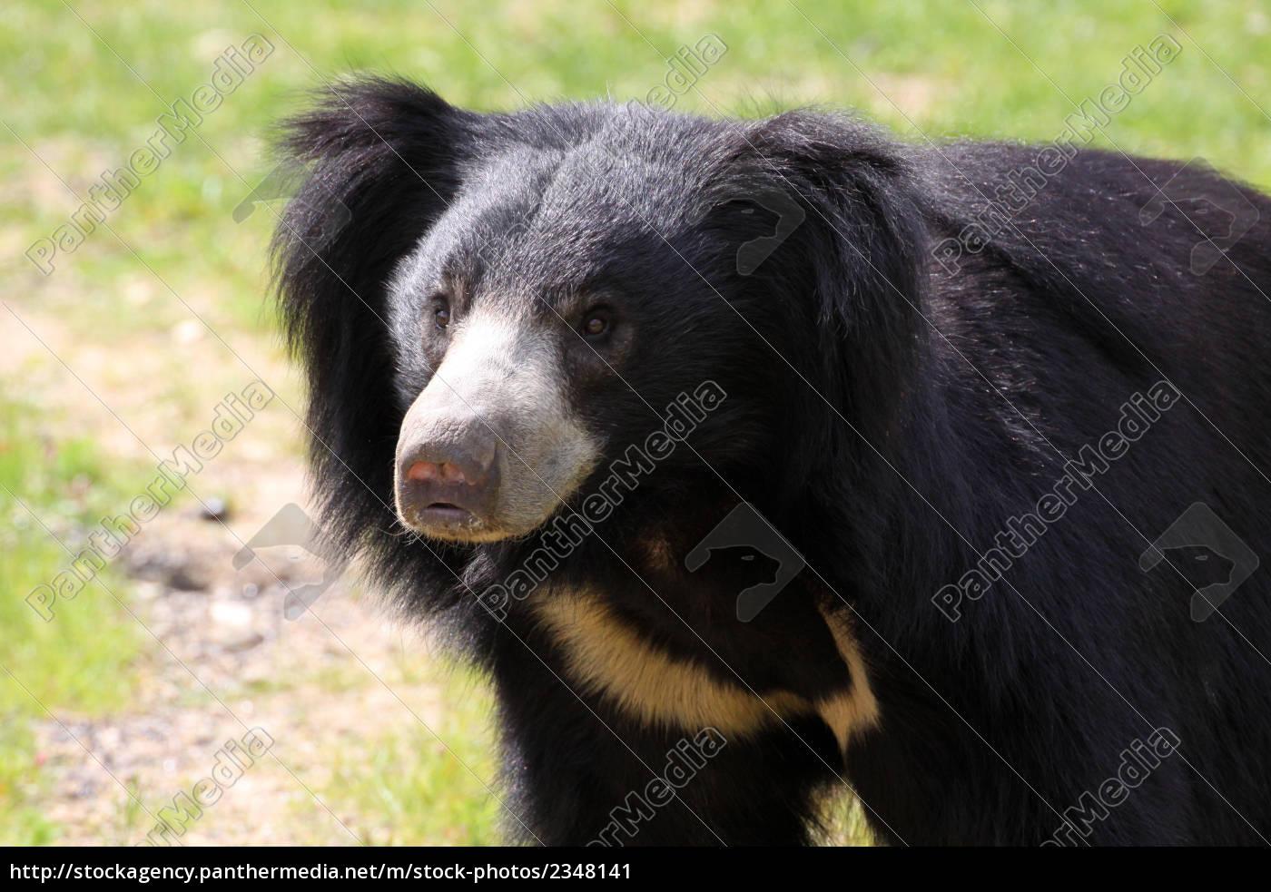 sloth - 2348141