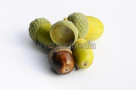 acorns nuts