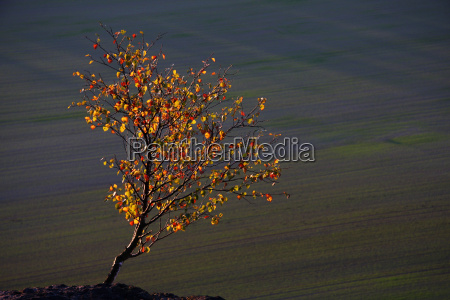 bright leaves at the top