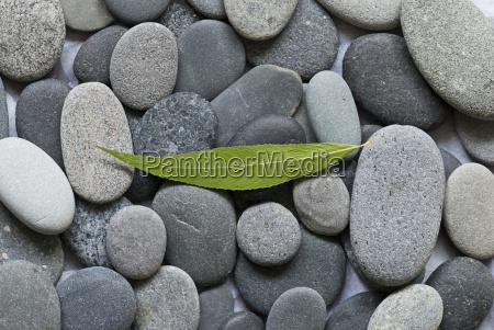 pebble, and, leaf - 2404901