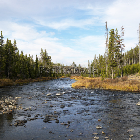 stream in yellowstone park