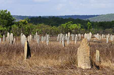 magnetic termite mound settlement