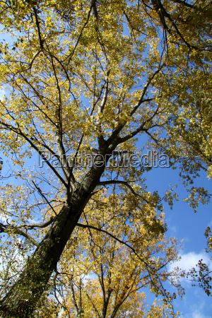 an autumn tree