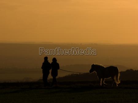 horse counter light pony evening light