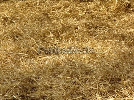 hay, straw, barn, shadow - 2526199