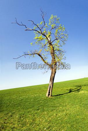 tree spring meadow firmament sky scenery