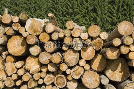 wooden pile in the spruce forest