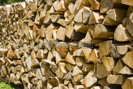 tree wood fuel forest forestry