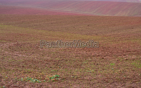 autumn field with new seed