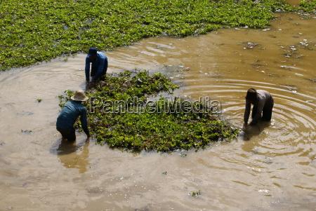 asian farmers