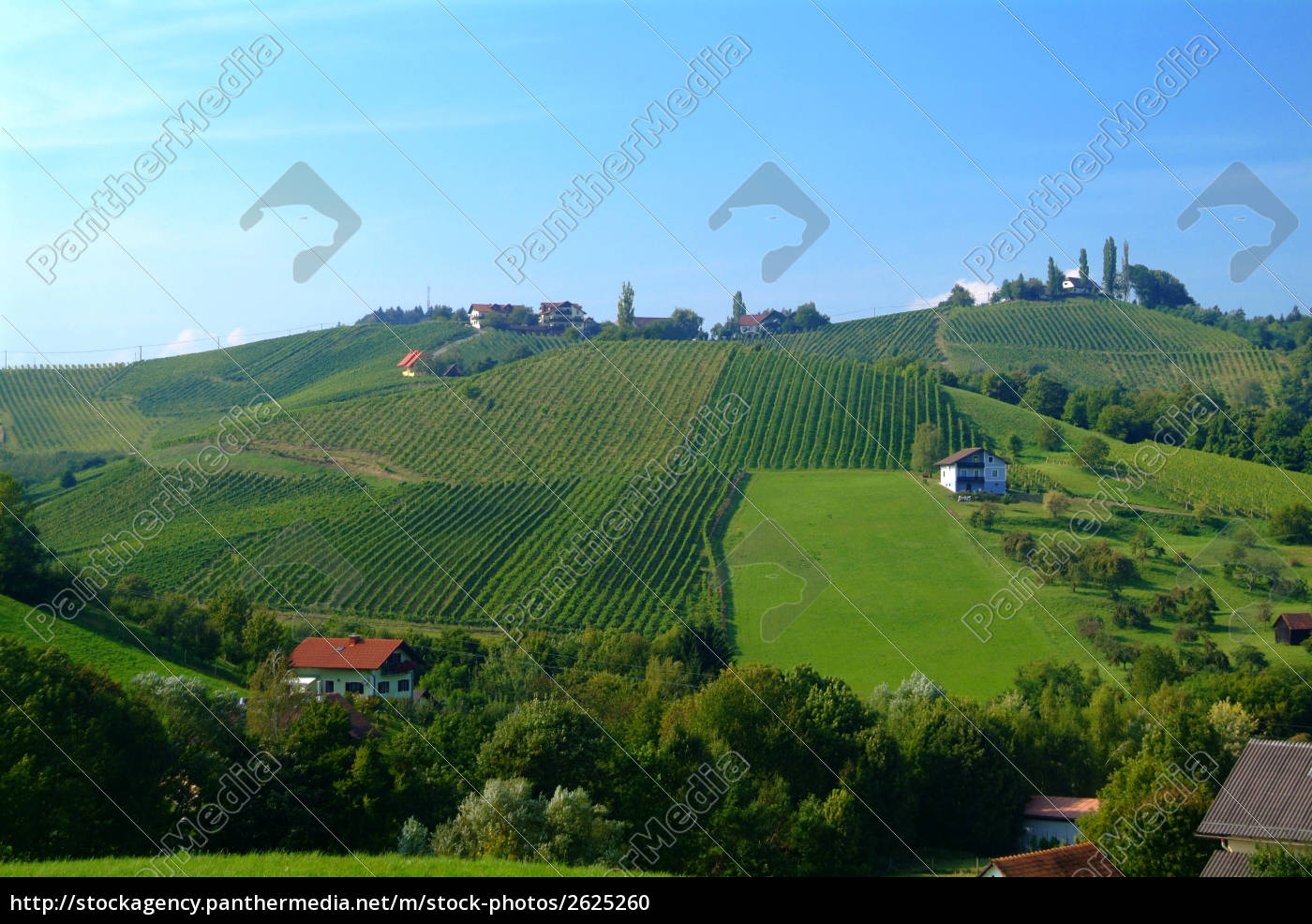 wine, hill, styria - 2625260