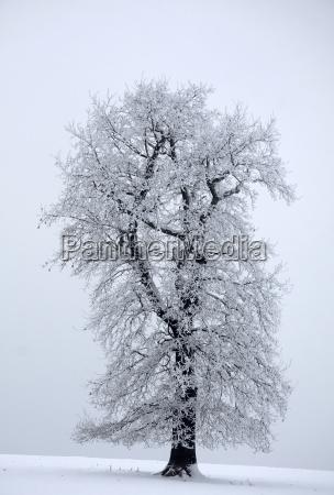 tree winter cold oak meadow snow