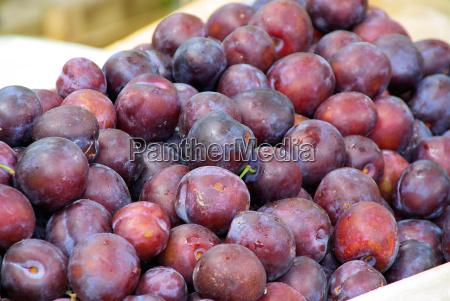 plum plum 07