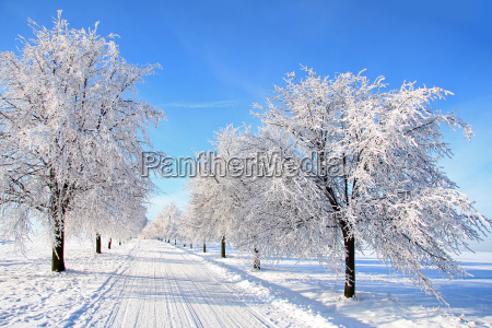 road through the winter