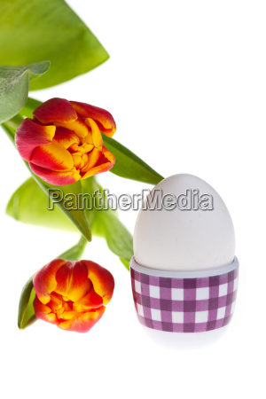eggs and tulips in spring