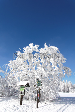 crossing in winter forest