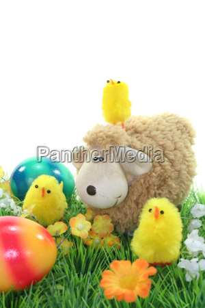 sheep with eggs and chicks in