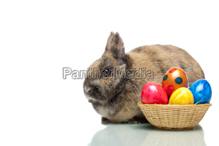 easter, bunny, next, to, basket, with - 2807205