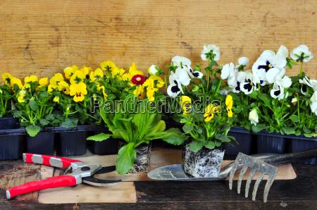 plant, flowers - 2808811