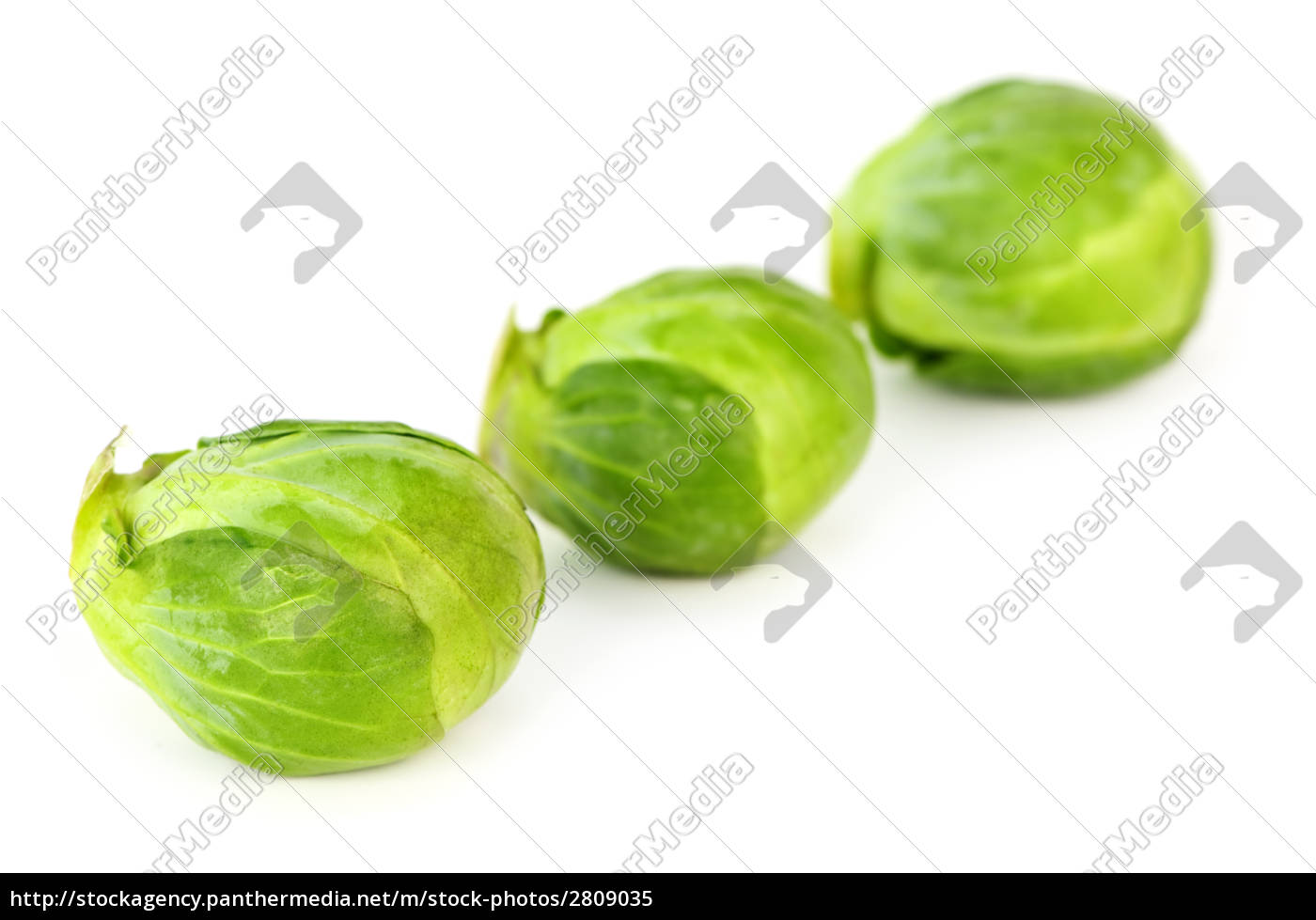 isolated, brussels, sprouts - 2809035