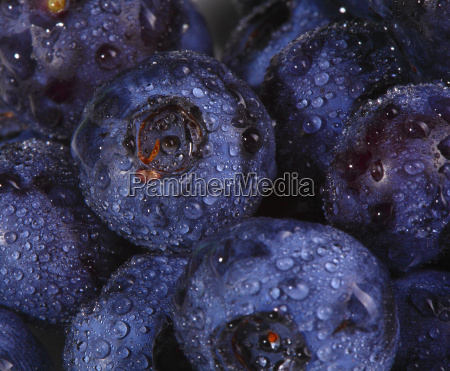 blueberry, background - 2811783