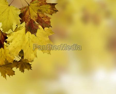 autumn, leaves - 2813865