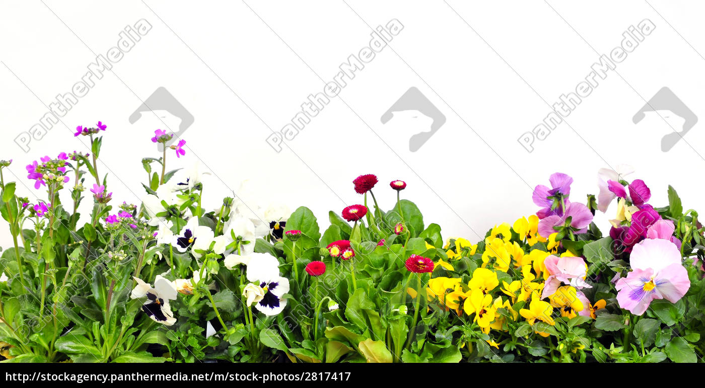 floral, background - 2817417
