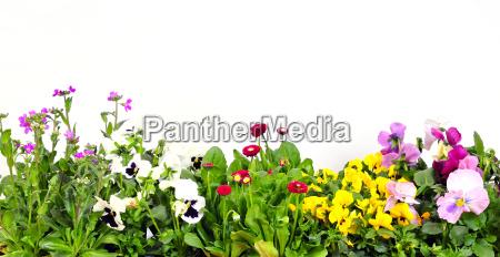 floral, background - 2817417