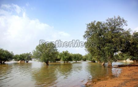 trees in alqueva lake