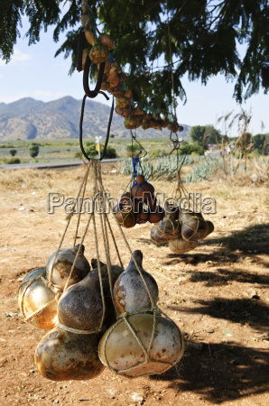 calabash gourd bottles in mexico