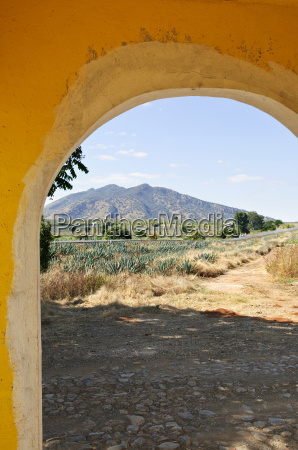 landscape, with, agave, cactus, field, in - 2829297
