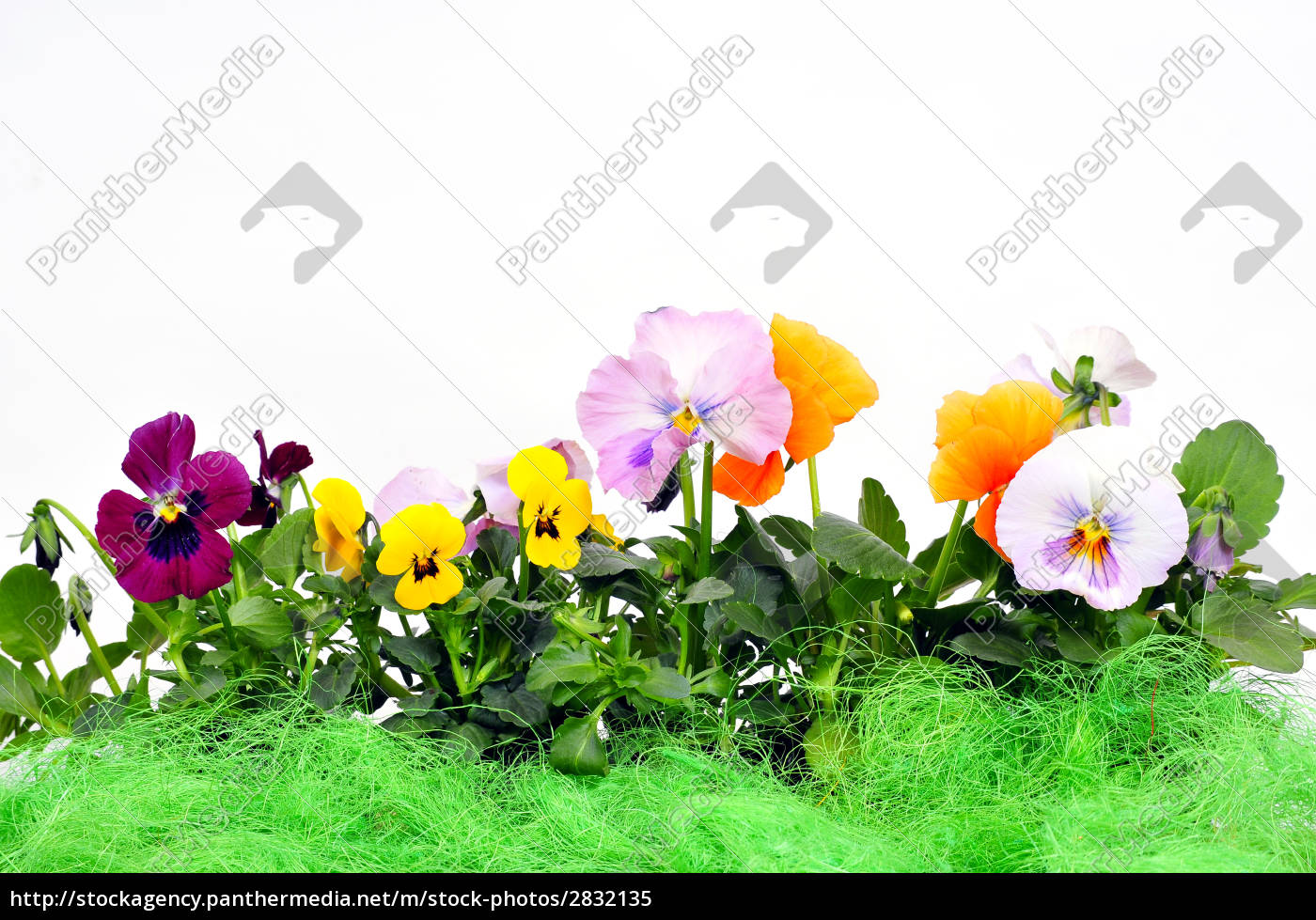 floral, background - 2832135
