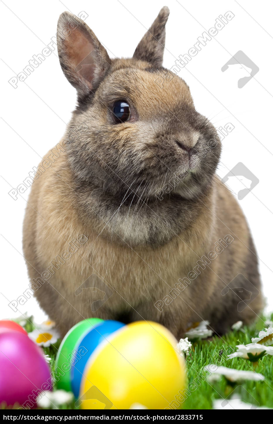 easter, bunny, sitting, with, colorful, easter - 2833715