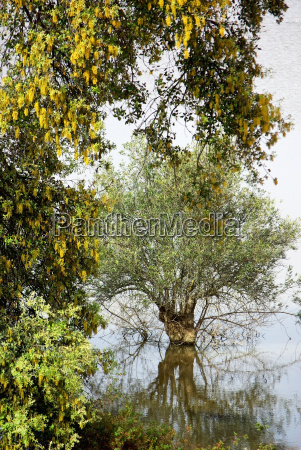 trees in alentejo lake