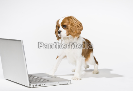 cute, puppy, with, laptop - 2834487