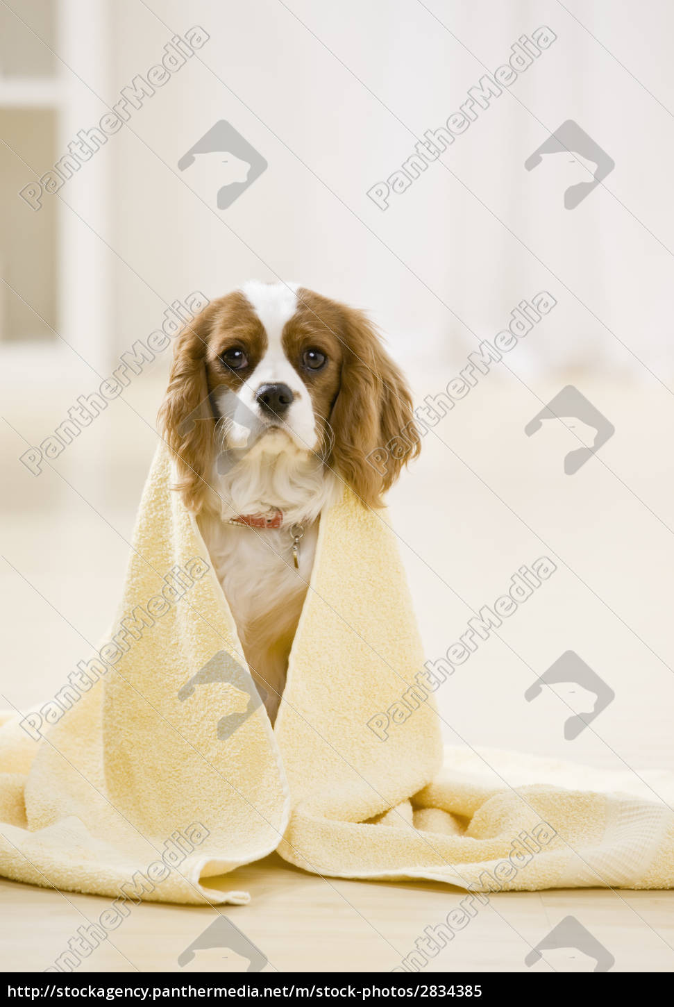 dog, covered, by, towel - 2834385