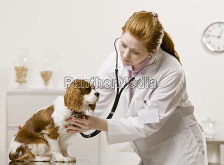 young, female, veterinarian - 2834223