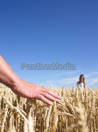 hand couple in wheat field