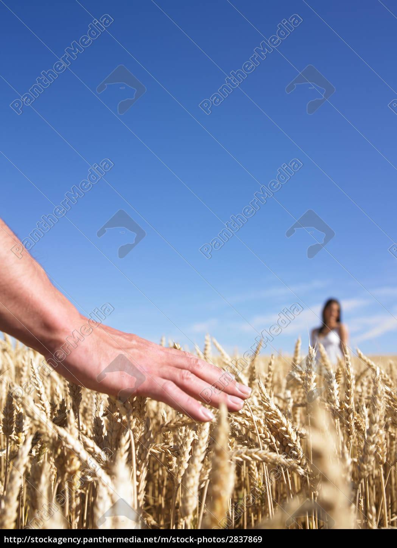 hand, &, couple, in, wheat, field - 2837869