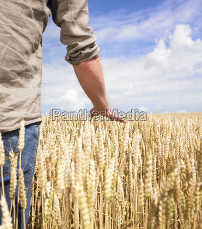 hand, and, wheat - 2837601