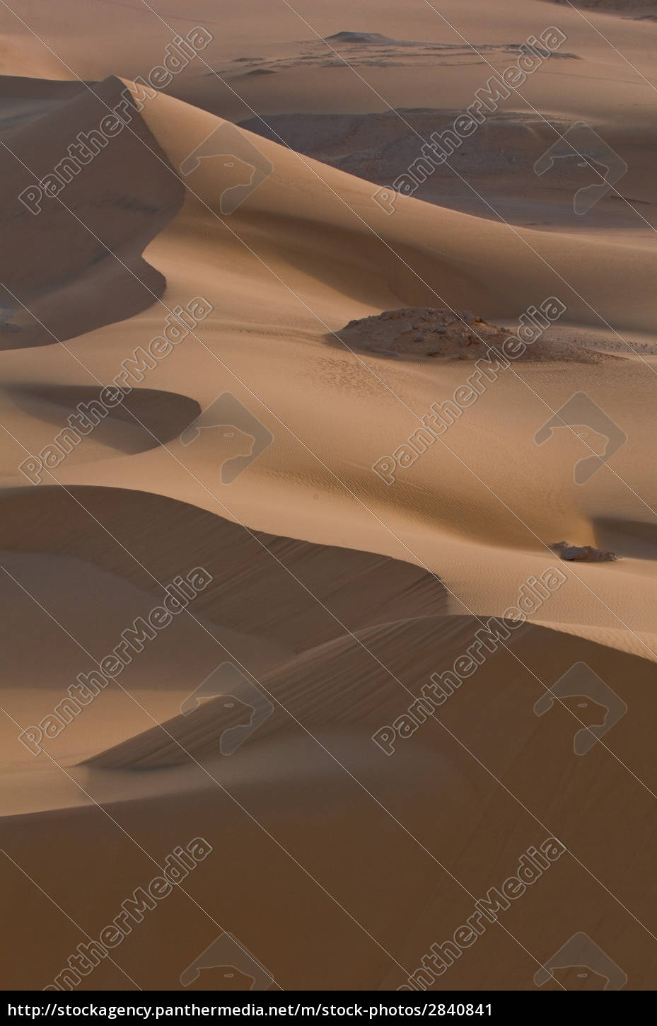 morning, mood, in, the, dunes - 2840841