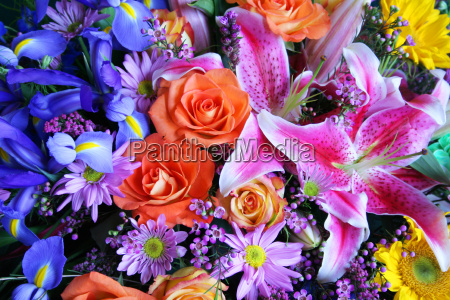 Blue, Arrangement, Yellow, Flowers, Purple, Colorful - 2846751