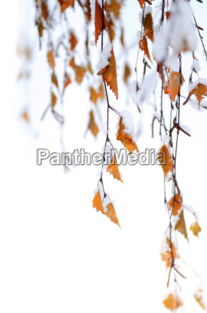 snowy, branches - 2847889