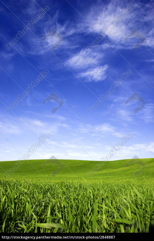 spring, field - 2848887