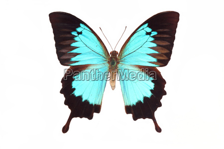 butterfly, isolated, on, white - 2885501